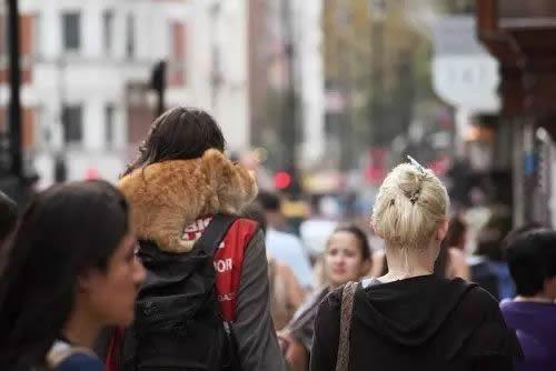 《流浪猫鲍勃》,一只猫改变一个人-私会鲁斌