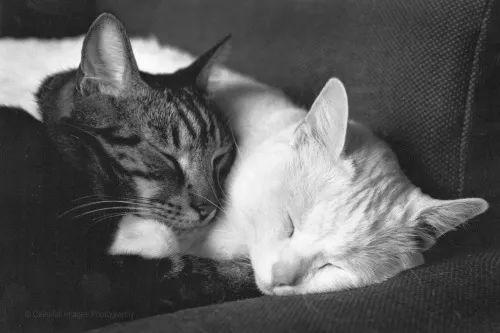 你睡眠不好、压力感大、身体变差,可能只是因为孤独 | 成年人如何发展交心的友谊?-私会鲁斌