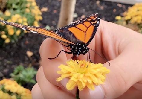 """纽约小哥偶然救了一只蝴蝶,没想到成了男版""""香妃""""……他们的故事暖哭了200万人"""