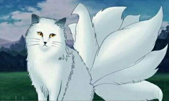 八尾猫的故事 | 位于生物灵力顶端的猫,却为何反而不易成仙。-私会鲁斌