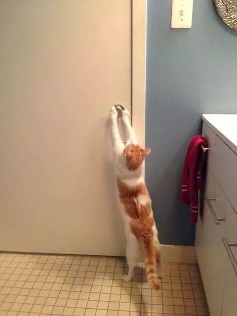 猫为啥要看人上厕所?