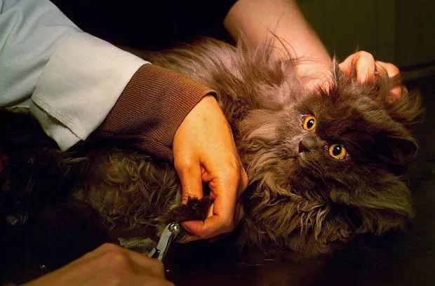 你的猫真的鄙视你吗?