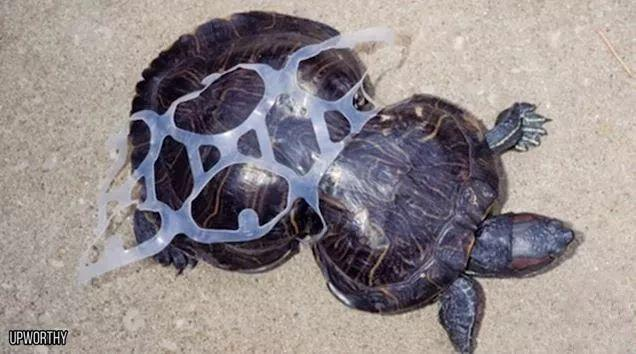 怀孕母亲被44斤垃圾杀死:这是人类拍过最羞愧的照片