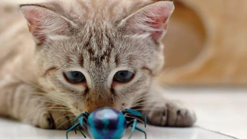 猫能吃虫子吗?