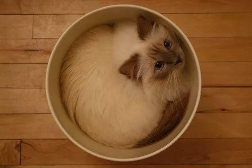 猫是液体吗?