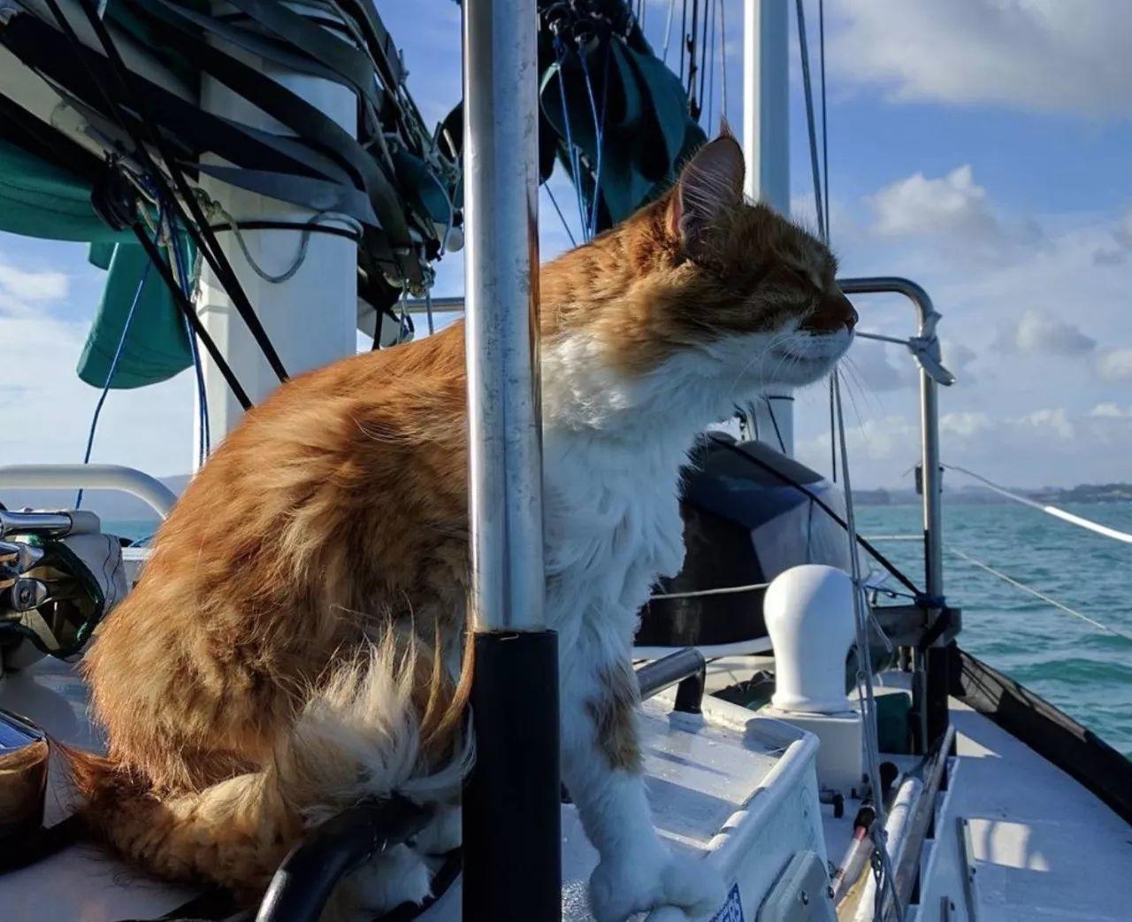 携猫旅行简史