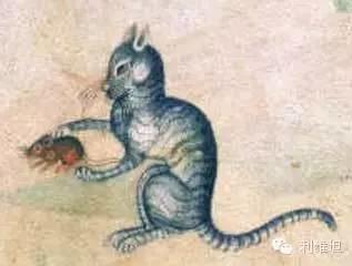 猫舔菊花,由来已久(外一篇)