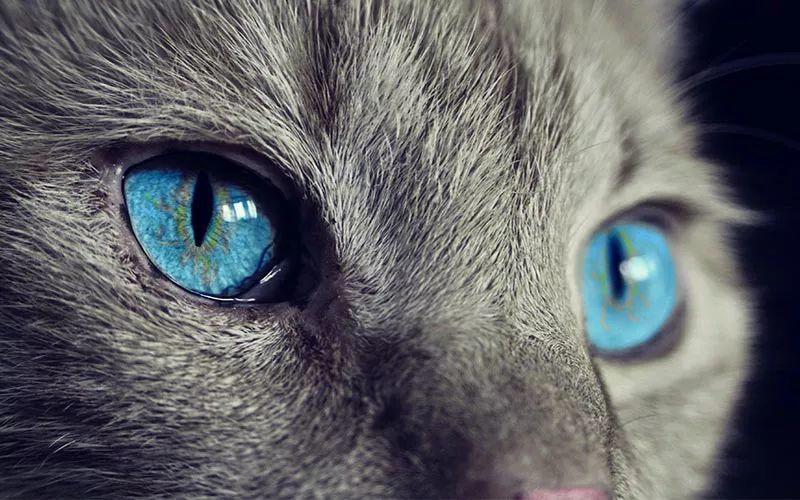 猫眼中的世界和人类有何不同?