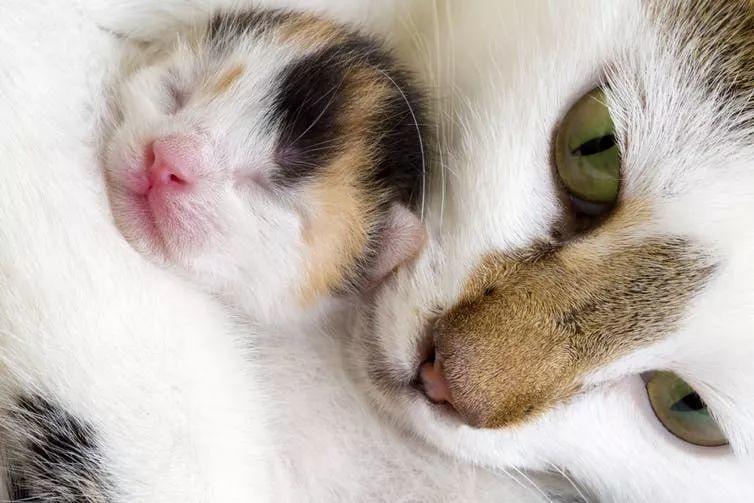 猫为什么喜欢钻盒子?