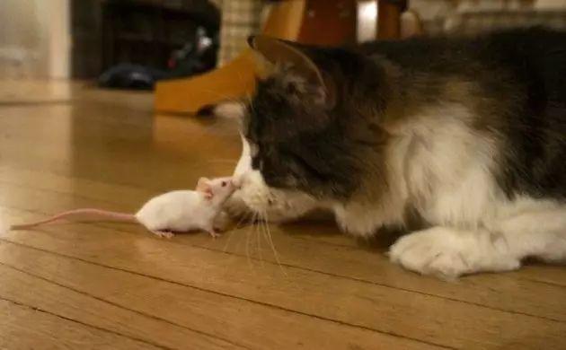 猫会让人变疯吗?