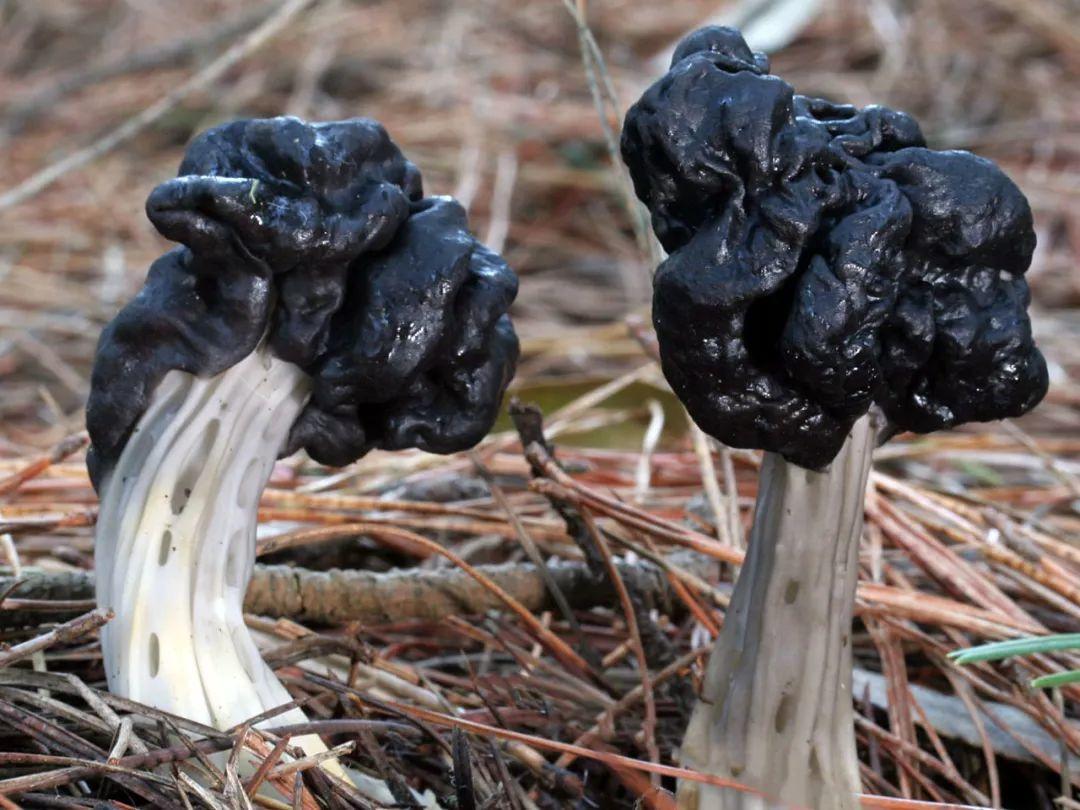 这个星球神秘蘑菇图鉴