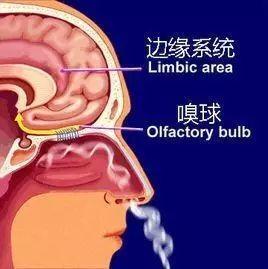 气味与情感记忆究竟是怎么回事?