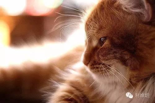 说实在的,人和猫能交流吗?