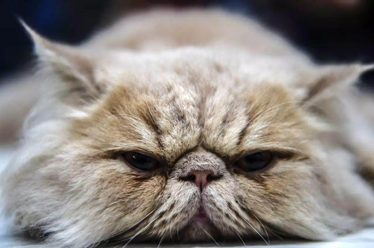 关于猫的奇怪研究