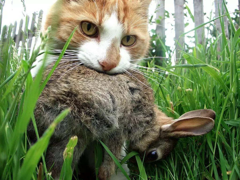 猫的道德成本
