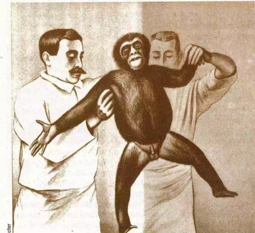 真实故事:猴子-人体睾丸回春术