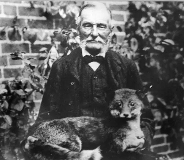 猫咪婚礼以及标本的奇异史