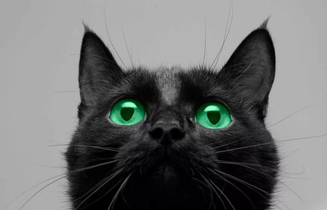 触目惊心的中世纪屠猫狂欢史