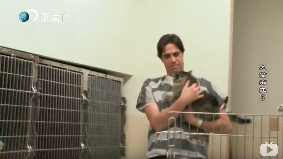 快被安乐死的流浪猫,送去监狱给犯人,几个月后他们变成了这样……