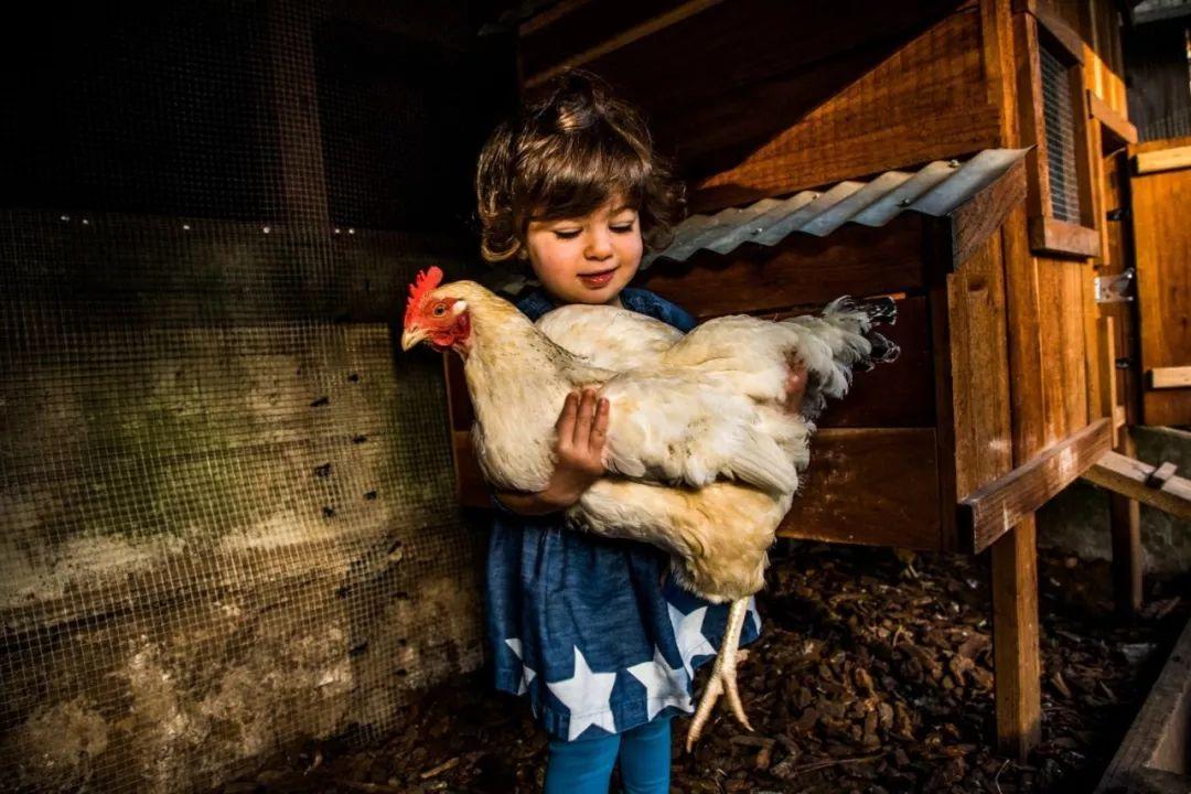 通过鸡来获得的优越感