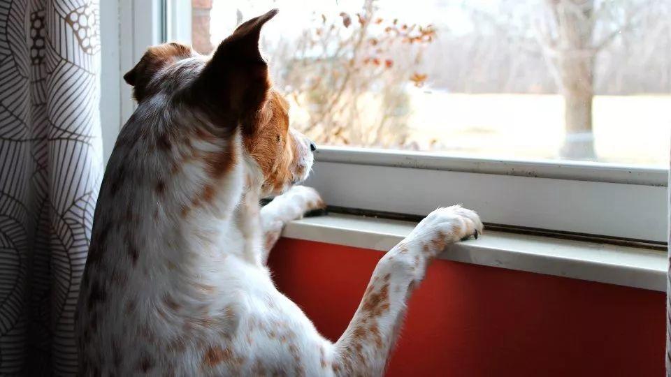 你会让电视陪伴独守空房的猫狗吗?