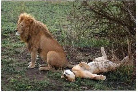 人类为爱鼓掌的时间,在动物界能排老几?